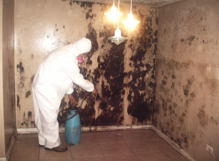 top class mold damage restoration